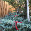クリスマスツリー完成!