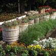 花いっぱい作業 H29-08-20 ㈰ 曇
