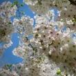 花粉飛散最高潮。