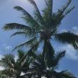 ハワイ日記〈プロローグ〉