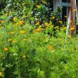 季節が進む、移り変わる自然の色