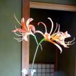 庭の花(夏)