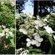 猛暑の中、元気に咲く花たち