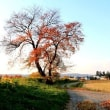 散り残る紅葉が夕日に輝いて美しい