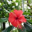 新宿御苑(8月の花)