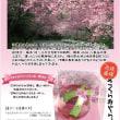 さくらみやらび-桜美童-古酒25%180ml