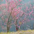春の信濃路・上田・・・千曲川の狭隘な谷・・・半過岩鼻の上・・・千曲公園からの風景