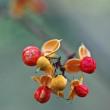 薮のガーデン 秋色