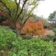山田池公園に紅葉を見に行ってきました♪