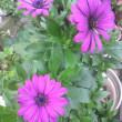 温かいから花が咲いています