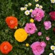 庭にも春がやってきた! (No 1994)