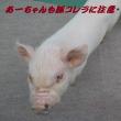 日本は外国人の犯罪天国?だったんだ><;;