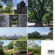 福岡城藤まつりに行って来ました(*^◯^*)