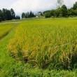 久々の稲作報告その3