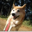 番犬ハナの13歳の誕生日