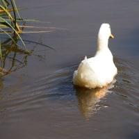 秋のあやめ池