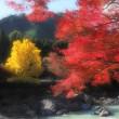 紅葉の御岳渓谷 1