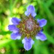 ウツゴグサ・マタタビの花が咲きました・・・