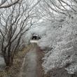 今季初霧氷