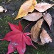 こんなに近くに雑木林とせせらぎが・・村野家住宅(国登録有形文化財) 紅葉と秋の見学会 🍁🍂