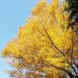 神代植物園紅葉 8