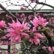 生国魂神社 春の花