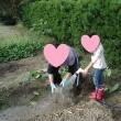 畑、孫とモロヘイヤ・里芋収穫