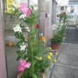 多摩川自然情報館の入り口は花盛り