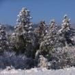 地域のみなさんで・・・・・・通学路の除雪