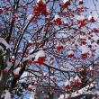 札幌は久しぶりの降雪があった