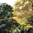 秋深まる都心
