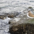 イソシギ 真冬の海辺で