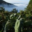 雲海の季節