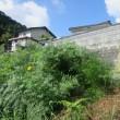 3 茶臼山(神宮寺山城230m:安佐北区)登山  「茶臼山」の山容