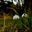 『 春爛漫!!! 』