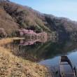 ★中綱湖の桜 2018