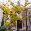 秋パリの中庭
