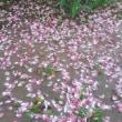 花水木は散ってもキレイ