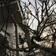 色のない空の下に咲く白い梅の花が可憐