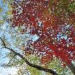 ゆる体操、ハゼの紅葉、稲毛海浜公園ジョギング