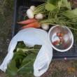 今日の収穫 カブ ニンジン うまい菜 イチゴ