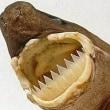 シロナガスクジラの傷跡