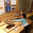 孫と自然史博物館へ恐竜を見に行きました!