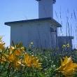 灯台CM ◆ 落石岬の危機 〈追記〉