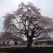 法亀寺・しだれ桜