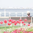 春の横浜 チューリップ散歩