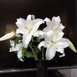 今年もカサブランカが咲きました!!