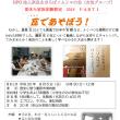 「夏休み家族体験教室」を開催します/8月5日(日)と9日(木)!(2018 Topic)