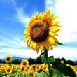 夏の季節の花10種の写真、花名の由来、花言葉