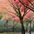 雨あがりの紅葉☂